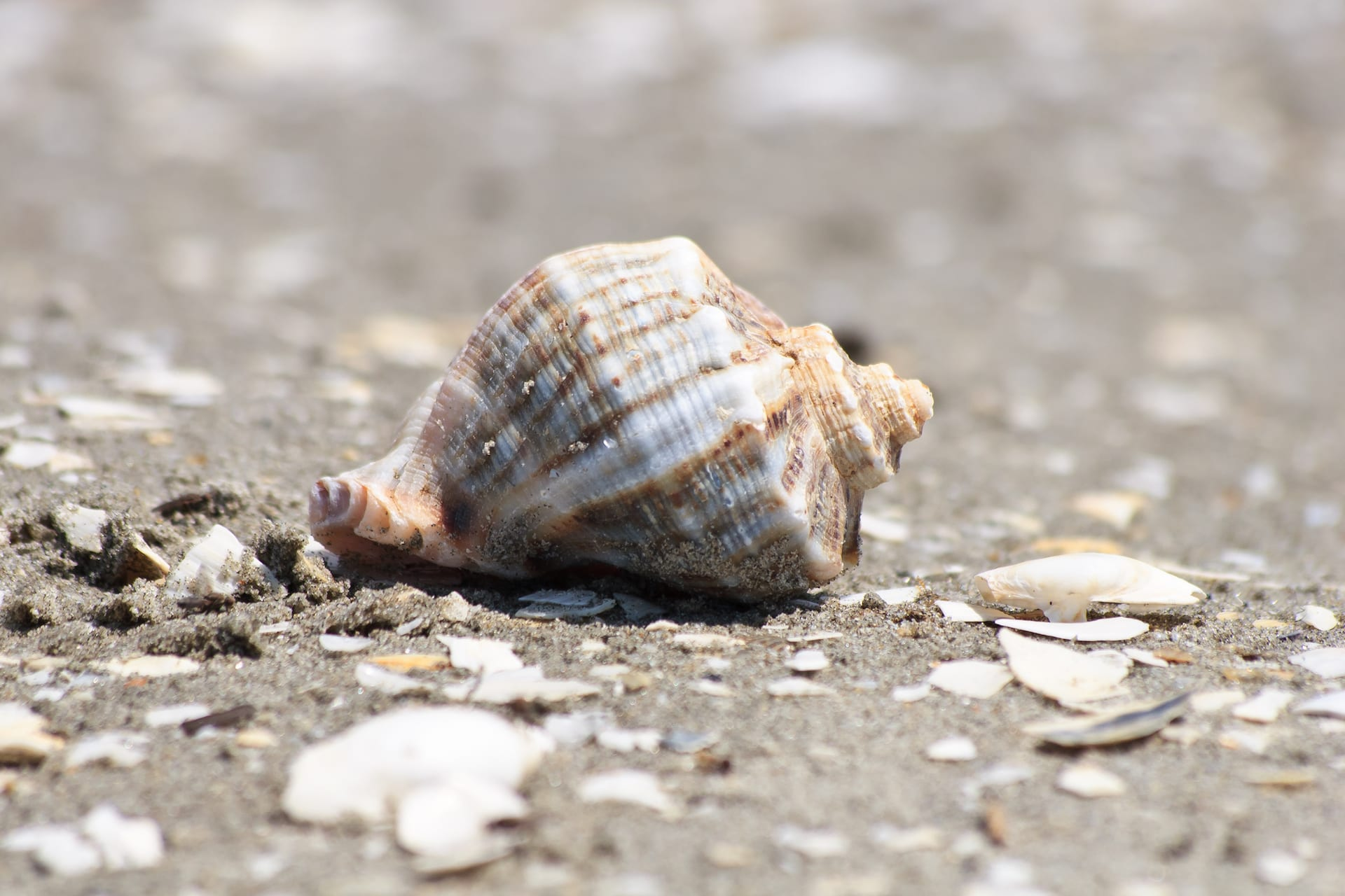 a sea shell on the sea beach